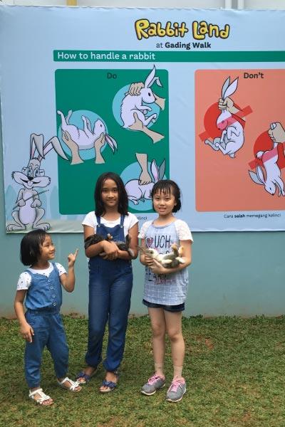 http://images.malkelapagading.com/album/3458/rabbit-6.jpg