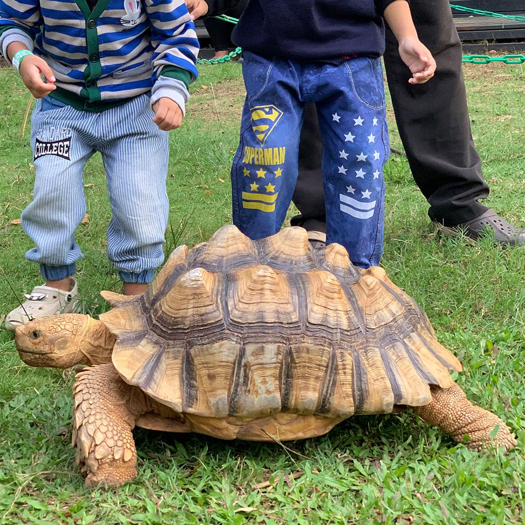 http://images.malkelapagading.com/album/6858//SQP-Turtle-Island-album.jpg