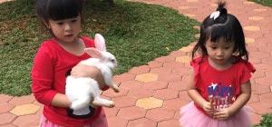 Bermain Bersama Kelinci di Rabbit Land