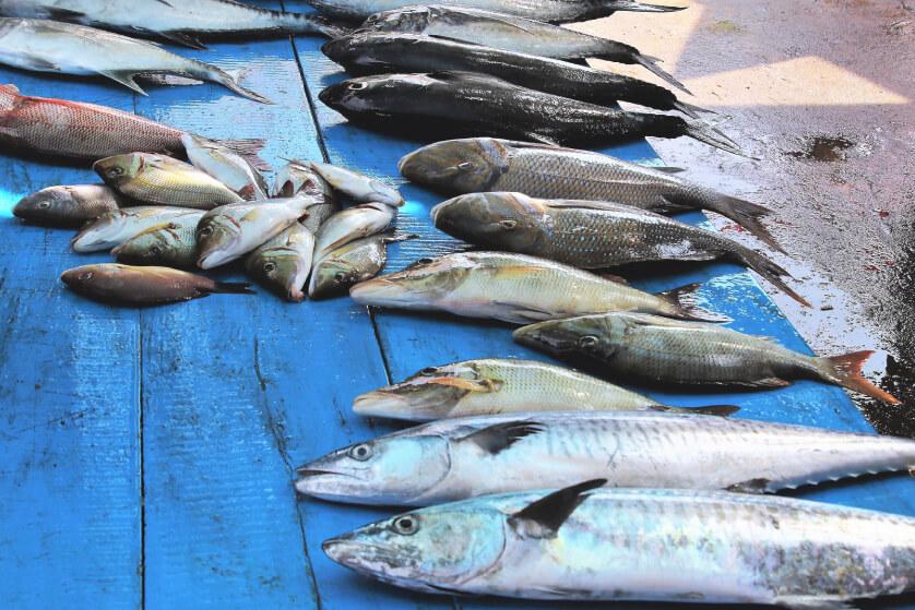 Kedonganan Fish Market