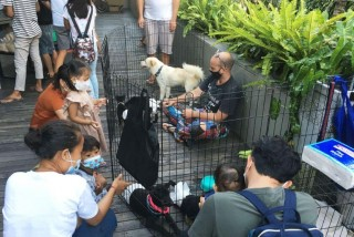Samasta Flea Weekend Market Special Pets Adoption