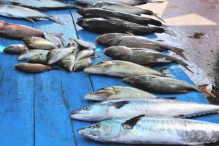 kedonganan-fish-market