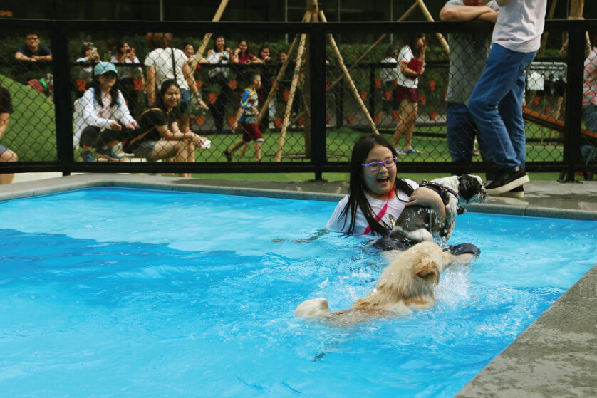Train Your Dogs at PAWS Dog Dream Park